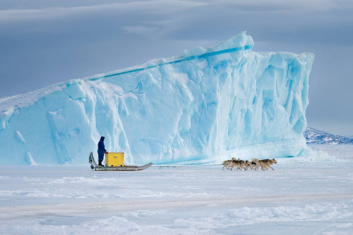 A dog sled transport with fish on the sea ice near Uummannaq in North Greenland. Photo by Marcela Cardenas.