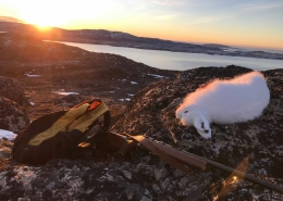 Landscape photo of arctic hare riffle and backpack with sunset. Visit Greenland.jpg