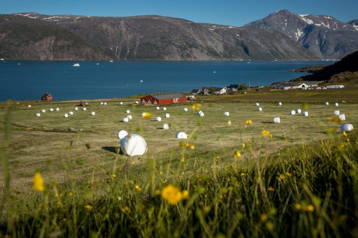 A field with straw bales at a farm in Qassiarsuk in South Greenland. Photo by Mads Pihl - Visit Greenland
