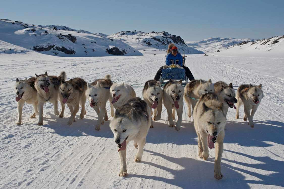 World of Greenland dog sledding