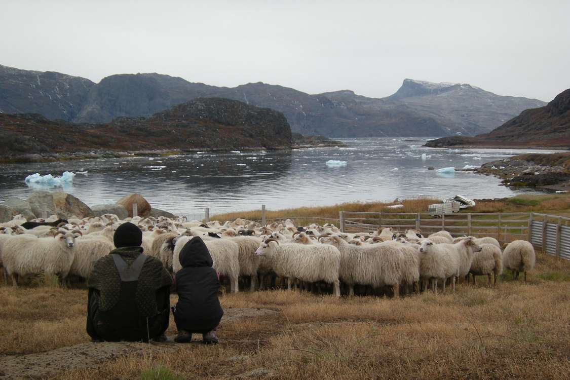 Kalista and Ina with their sheep back from the mountains after summer. Photo by Agathe Devisme