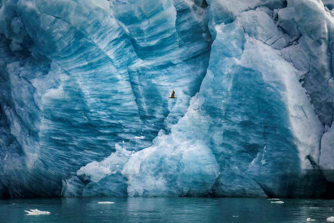A seagull by a glacier wall in the Eternity Fjord in Greenland near Kangaamiut. Photo by Mads Pihl - Visit Greenland