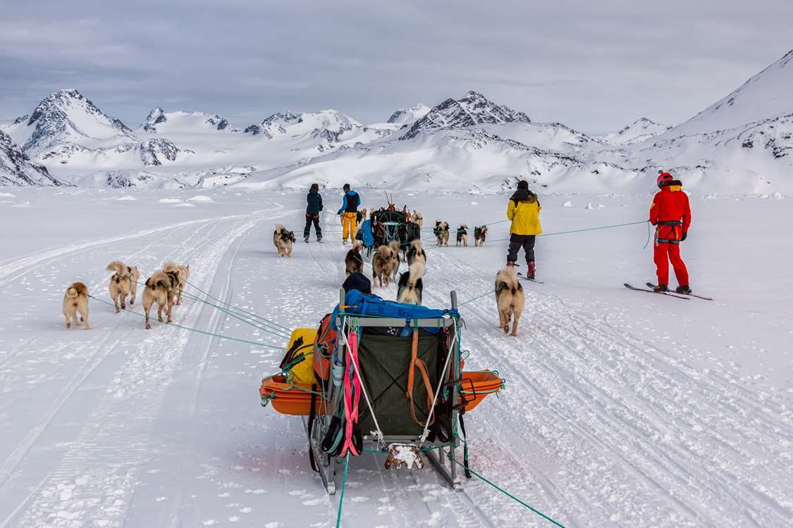Skiers attached to dogsleds in East Greenland. Photo by Pirhuk - Greenland Expedition Specialists