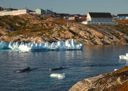 Two whales passing close to Hotel Diskobay. Photo by Espen Andersen, Visit Greenland