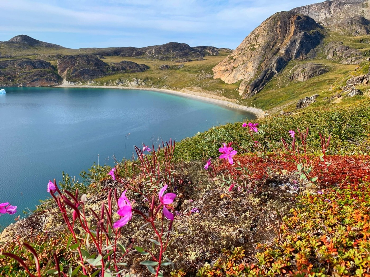 Blossoming flowers in Paradise bay. Photo by Espen Andersen, Visit Greenland