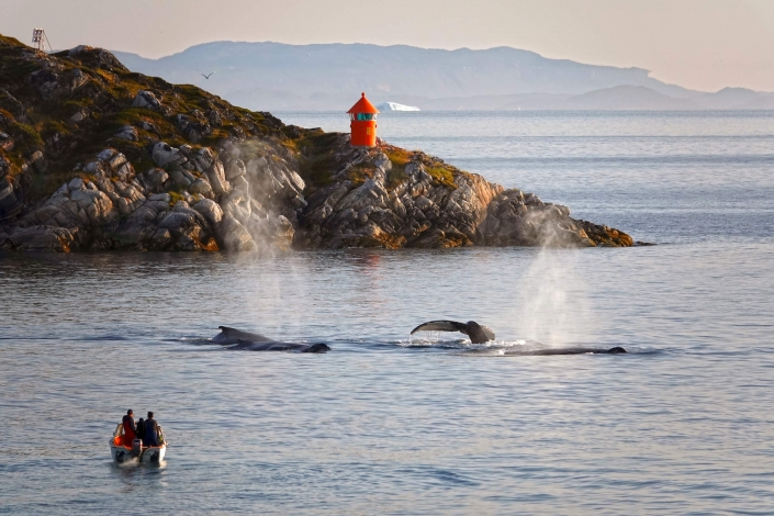 People observing three whales from their boat in Disko Bay. Photo by Espen Andersen, Visit Greenland