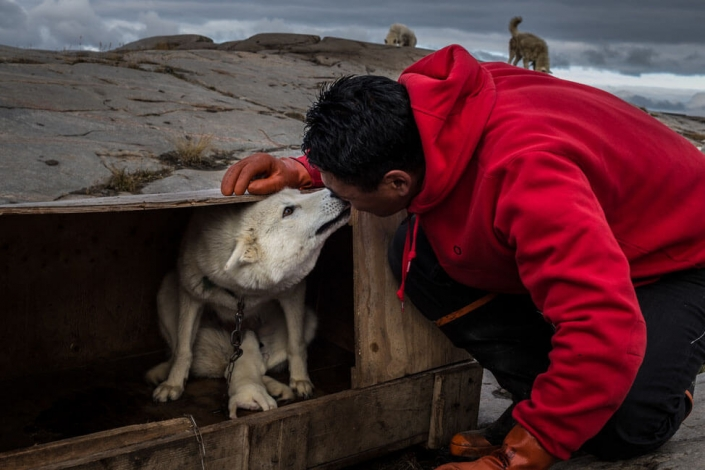 Musher greeting his sleddog in Aasiaat. Photo by Honest Greenland