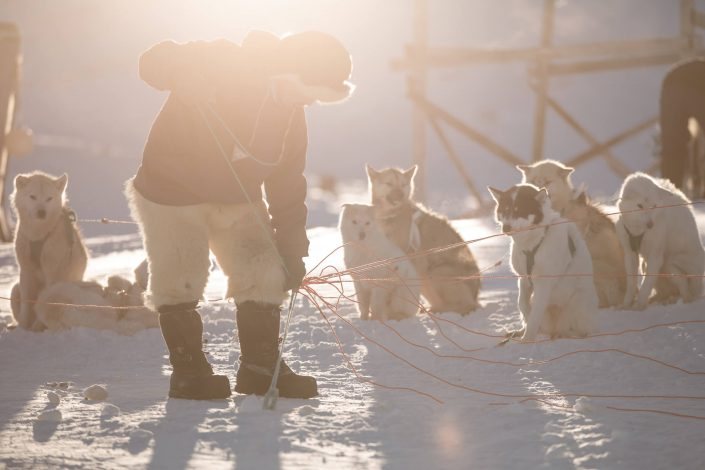 A dog musher preparing his sled dogs for a trip in Ilulissat in Greenland. Photo by Mads Pihl.