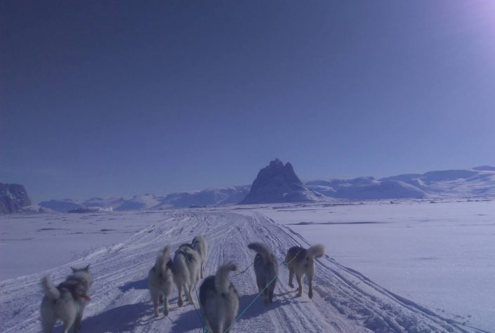 Photo taken from a dog sled on a tour near Uummannaq. Photo taken by Greenland Fjord Tours, Visit Greenland