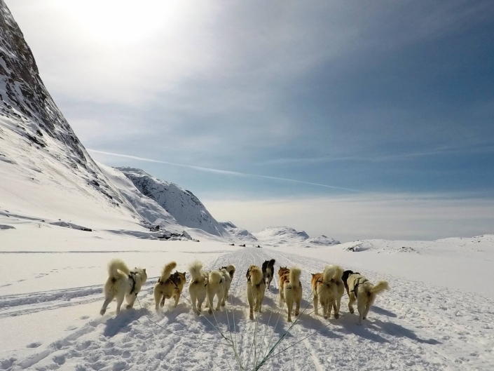 Dogsledding on ice in Winter.Photo by Diskobay Tours