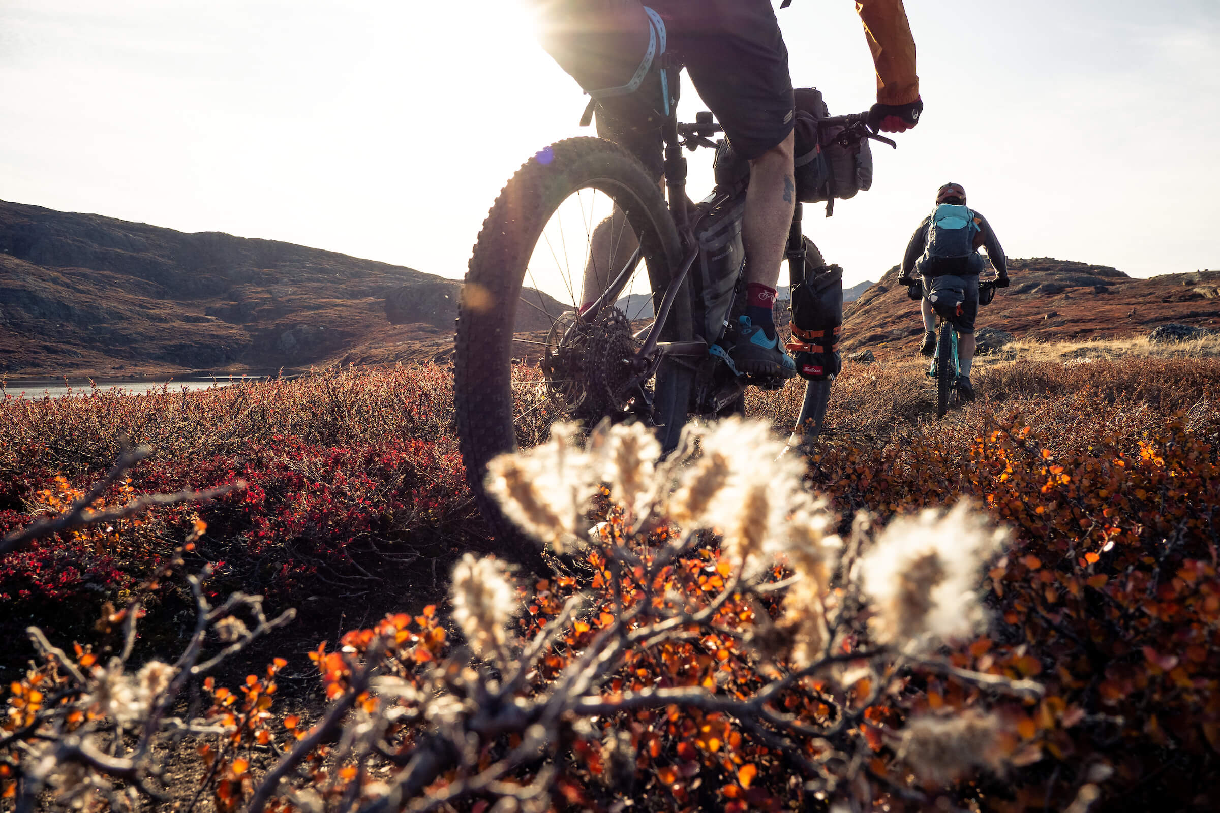 Mountain bikers riding past the fluffy white seeds of a Dwarf Willow illuminated in the low autumn sun along the Arctic Circle Trail. Arctic Circle Trail, West Greenland. Photo by Ben Haggar - Visit Greenland