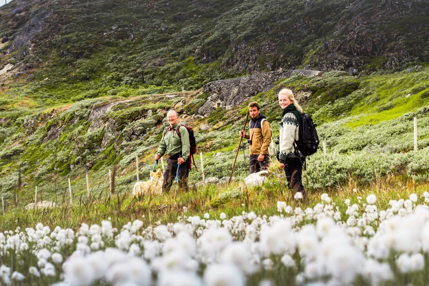 Three hikers hiking amongst blossoming flowers and green mountains in summer.