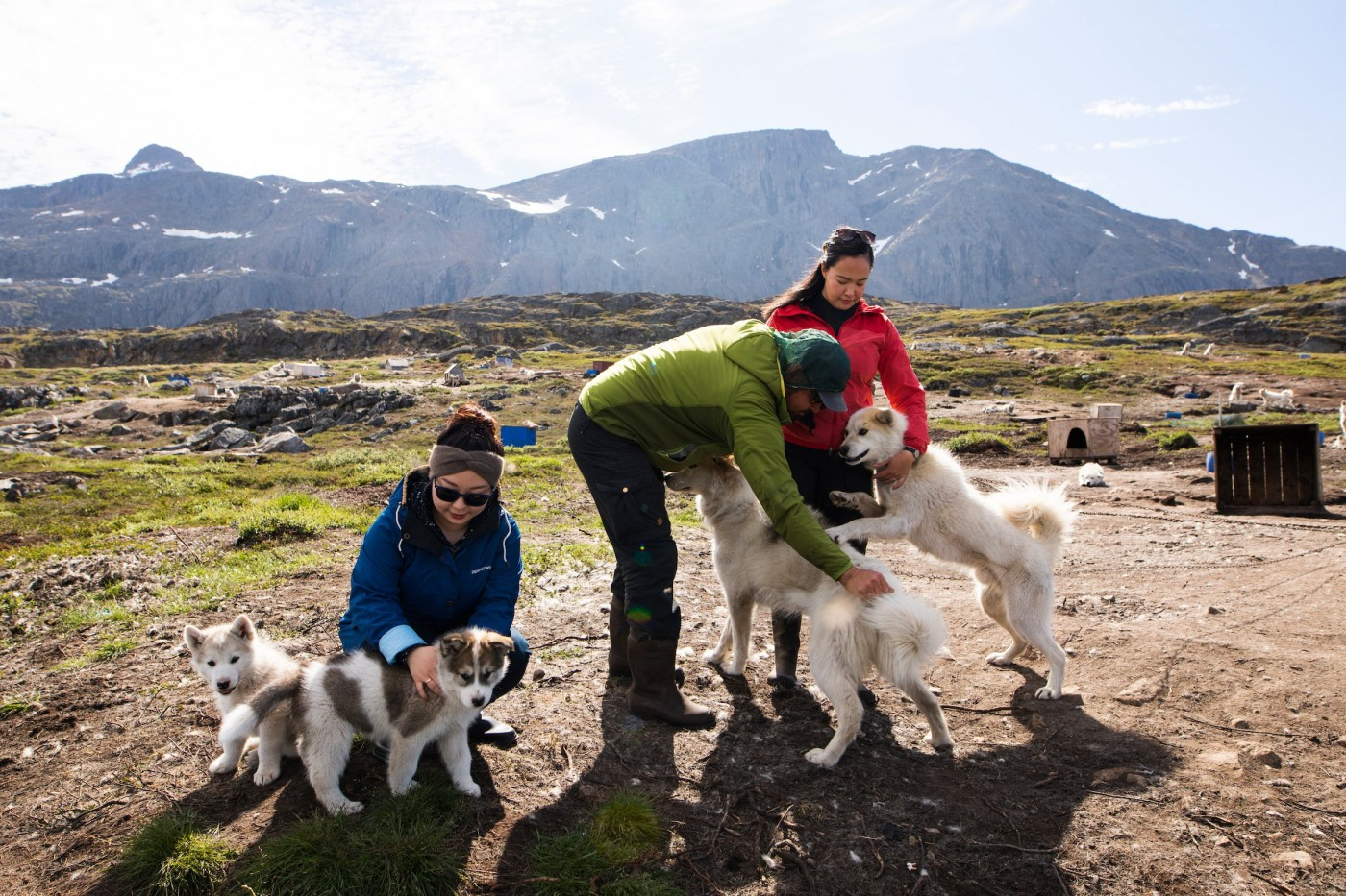 Dogsledge Taxi Puppies & Tourists. Photo - Aningaaq R. Carlsen, Visit Greenland