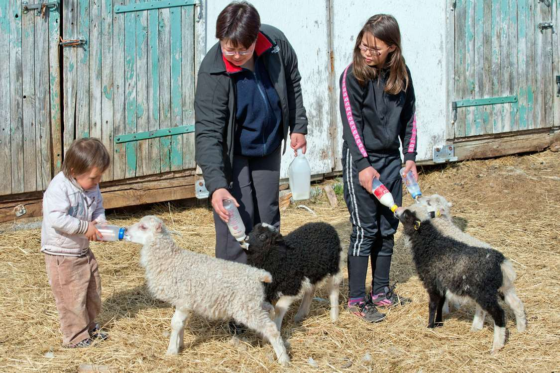 Locals feeding lambs with milk in bottles. Photo by Blue Ice Explorer