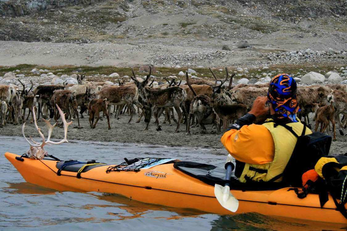 Kayaker observing grazing deers along the coastline of South Greenland. Photo by Tasermiut South Greenland Expeditions, Visit Greenland