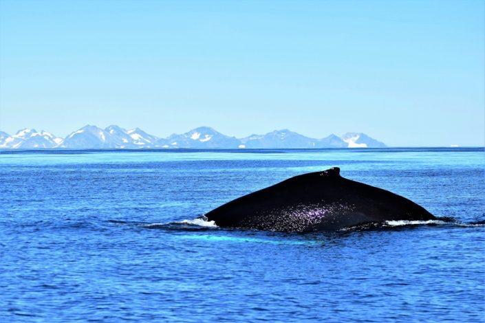 Greenland Vacation 03