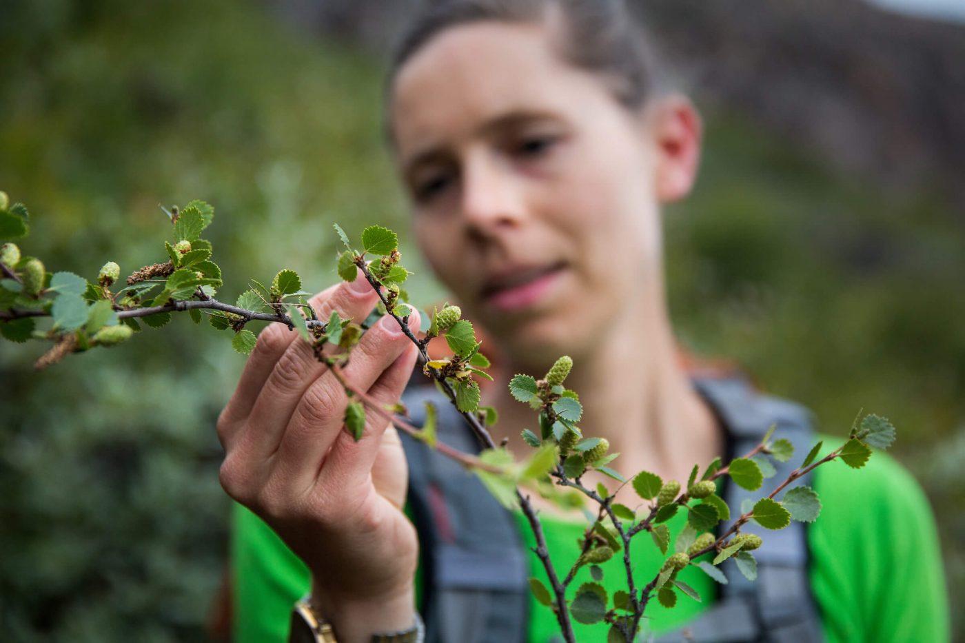 Hiker exploring trees in Narsarsuaq. By Mads Pihl
