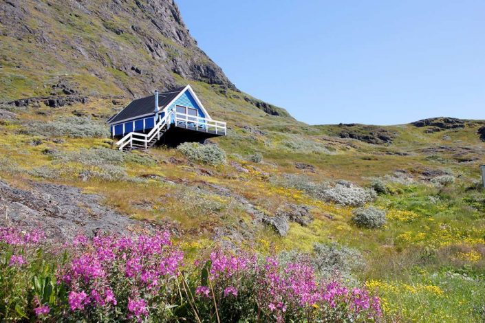 Blue wooden house with fireweed in Summer, Narsaq, South Greenland. Photo by Isikkivik
