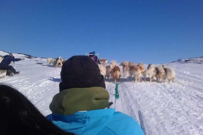 Dog sledding in North Greenland. Photo by Qasigiannguit Tourist Bureau